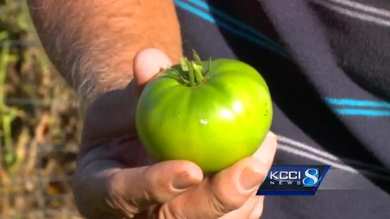 Community gardeners frustrated by thieves