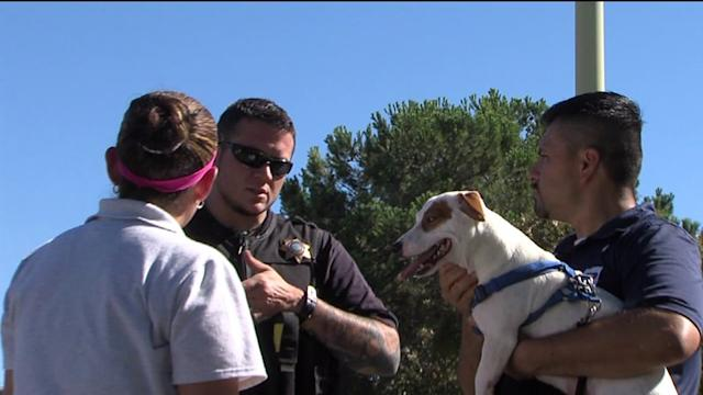 High Need for Animal Control Officers
