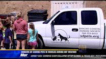 Dangers of leaving pets in vehicles during hot weather