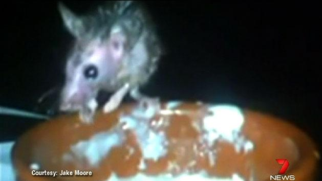Perth cinema targeted over rats