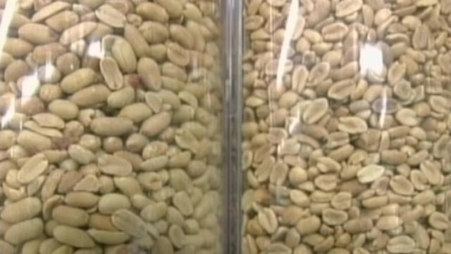 UK trial proves peanut allergy can be beaten