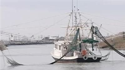 Shrimpers: Feds Wrong On Turtle Deaths