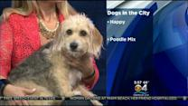 Dogs In The City: Happy Needs A Home