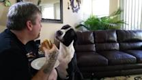 Dog Begs For Man's Sandwich
