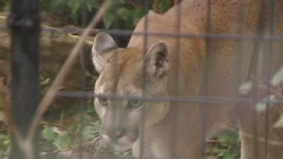 Tri-State Home To Several Animal Sanctuaries