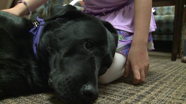 Therapy Dog Comforts Victims Testifying in Court