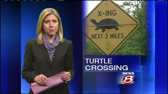Road signs warn drivers of endangered Maine turtles