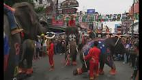 Elephants dance and play football in Bangkok