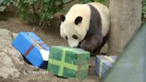 San Diego giant panda celebrates third birthday with cake