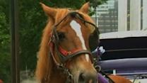 NY Carriage Horse Runs Through Central Park