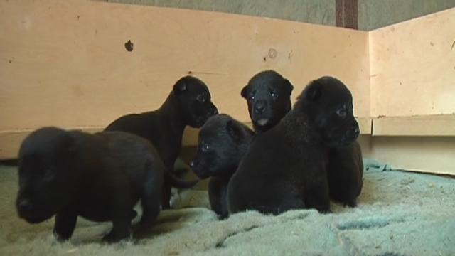 A stray canine mother risks life to reunite with her puppies