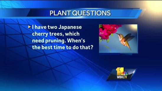 July 9: Gardening questions answered