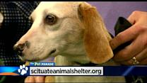 Pet Parade: Scituate Animal Shelter