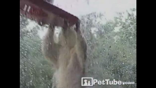 Squirrel Does Pull-Ups