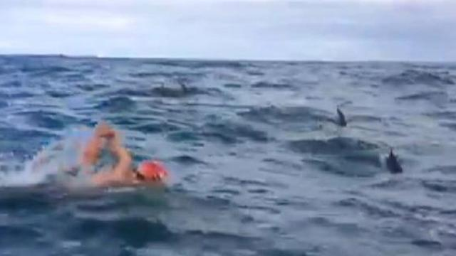 Dolphins Protect Swimmer From Shark