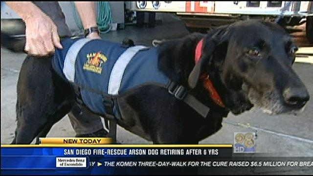 San Diego Fire-Rescue arson dog retiring after 6 years