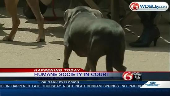 Humane Society of New Orleans to appear in court Friday