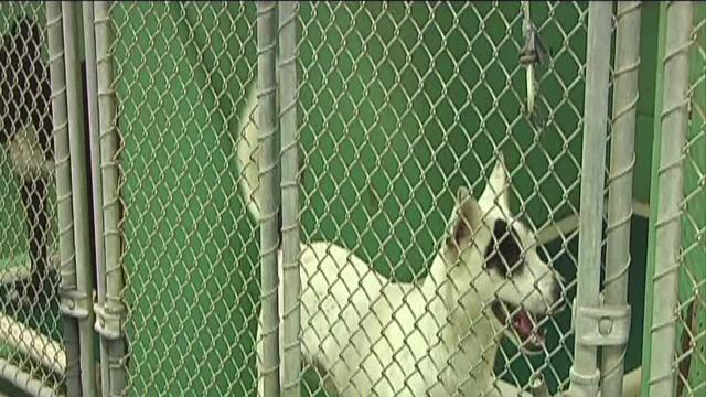 Animal shelter proposed closure