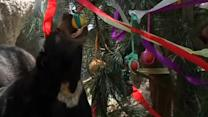 Christmas comes early at Chilean zoo