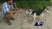 Husky adopts Veteran during Yadkin River paddle