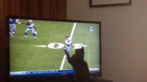 Cat Tries to Catch Football Pass on TV!