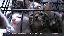 Overcrowded Animal Shelter Wants Negligent Owners Fined