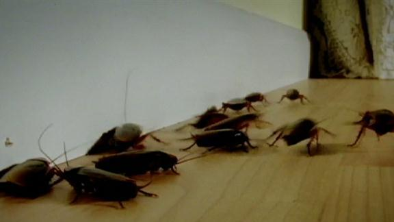 Sitting on Roaches