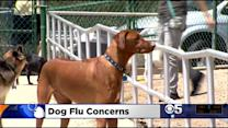 Deadly Dog Flu Arrives In California; Warning Signs To Look For