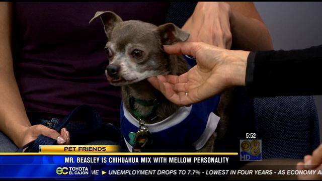 Mr. Beasley: Looking for new forever family