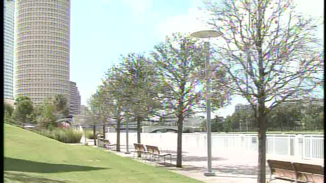 Tampa workers to replace dead oak trees downtown