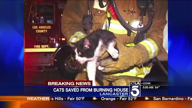 Firefighters Rescue Cats, Kittens From Burning Lancaster Home