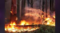 USFS: Hunter Caused Huge Wildfire Near Yosemite