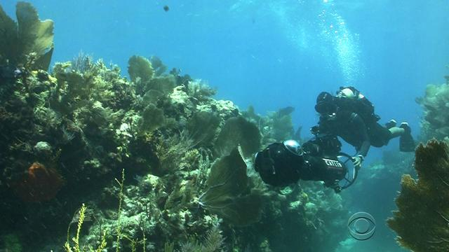 Mapping the world's coral reefs like never before