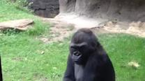 Best of 2013: Gorilla shows kids who's boss