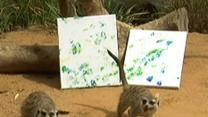 Meerkats Make Art to Fundraise Animal Projects