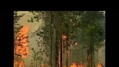 Forest fires rage in Russia