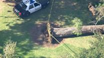Eight Children Injured After Tree Collapses in Southern California