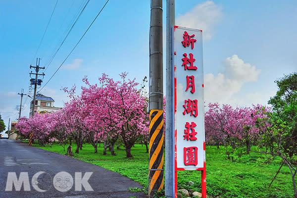 園區彷彿變身粉色仙境 (圖片提供/黃風)