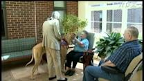 Therapy dog lifts spirits of veterans