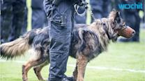 Deadly Heat: Police Dogs Die When Left In Patrol Cars