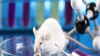 10 Horrific Animal Experiments