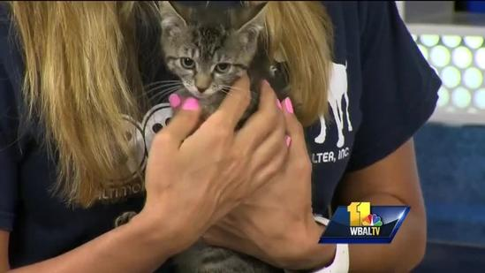 BARCS shows off cute adoptable kitty