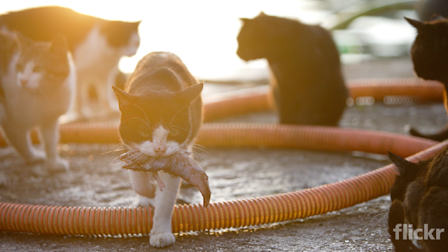 Taking photos of cute cats, Miss Chien changes a small town
