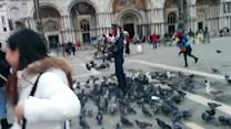 Pigeon Attack in St. Mark's Square