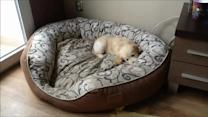 Puppy and kitten can't contain excitement for new bed!