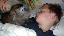 Monkey Tries to Wake Up Kid for School