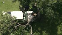 Elderly Driver Loses Control of Car, Plows into Tree