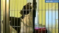 Death row dog to be put down