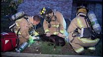 Dog Rescued After Pot House Goes Up In Flames