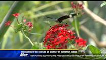 Butterfly Jungle opens at SD Zoo Safari Park